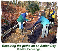 Repairing the paths on an Action Day