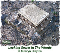 Leaking sewer pollution