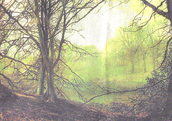 John Atkinson Grimshaw's Beeches, a view of Gledhow Woods in Leeds painted in 1872