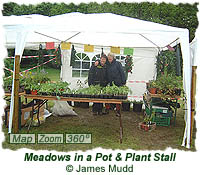 Meadows in a pot & plant stall