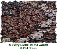 A Fairy Circle in the woods